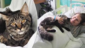 """Volejte """"doktora"""" Bumbáce: Pacienty v liberecké nemocnici léčí kocour"""