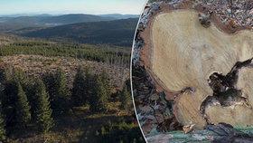 """Lesy zabíjí kůrovec a vedro. """"Krajina z jiného světa,"""" řekla o Šumavě režisérka"""