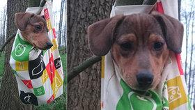 Tyran na Poděbradsku pověsil štěňátko na strom a ujel! Jezevčík už našel novou rodinu