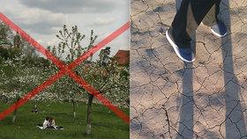 Konec líbání pod třešní? Česko přišlo nejen kvůli suchu o miliony ovocných stromů