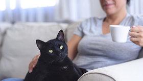 Dokáže kočka chránit před negativní energií nebo léčit? A jakou roli hraje její barva?