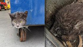 Velké nesnáze malé kočičky. Hlava jí uvízla v odtoku, ven ji dostali až hasiči