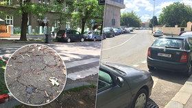 Praha 7 vyhlásila stav klimatické nouze. Plánuje více stromů i zelené střechy, apeluje na obyvatele