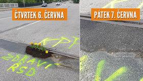 Šlendrián jako Brno: Zoufalí lidé zasadili do díry v silnici kytky, Blesk zasáhl a výmol je opravený