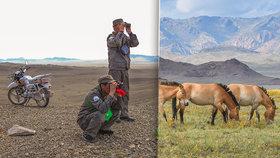 Devátá výprava koní Převalského z Prahy do Mongolska: Populace v Gobi bude brzy soběstačná