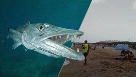 V dovolenkovém ráji útočí záhadná ryba: Pokousala dvě děti, Španělsko zavřelo pláže