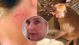 Patrizii v exotickém ráji pokousala opice. Za vakcínu proti vzteklině po ní chtějí 120 tisíc