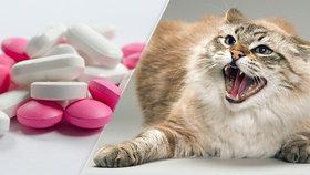 Zabijáci psů a koček. Tyhle léky svým mazlíčkům rozhodně nedávejte