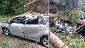 Českou rodinu zavalily v autě na dovolené stromy: Malé děti poranily střepy!