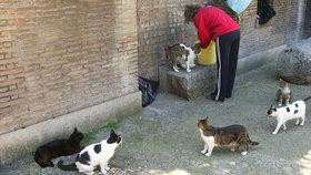 Sousedé udali důchodkyni za krmení toulavých koček. Má jít do vězení