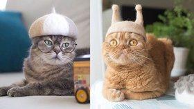 Neuvěříte: Tyhle skotské kočky mají čepice z vlastních chlupů!