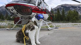 Záchranář Gary je hvězdou Instagramu. Kocour cestuje po světě a pomáhá, kde může!