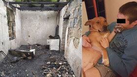Zbití a se svázanými tlapkami! Feťáci prý v Adamově upálili čtyři psy ze msty