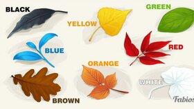 Podzimní test osobnosti: Vyberte si svůj lístek