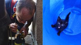 Kotě si vymňoukalo život: Zapadlo do úzké roury, vyndali ho hasiči