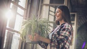 Nejlepší pokojová rostlina pro vaše znamení! Proč se hodí právě pro vás?