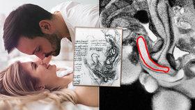 Unikátní foto penisu v pochvě před 20 lety ukradlo Vánoce. Lidé chtějí sex zdarma, smějí se vědci