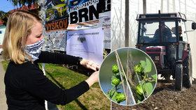 Pivo v ohrožení? Zemědělci se bojí jara, studenty mají na chmelu i v traktorech