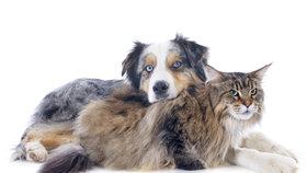 Chovatelům domácích mazlíčků začala sezóna. Mají se bát koronaviru?