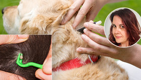 Přípravky na psy mohou být pro kočky smrtící! Odbornice popsala plusy a minusy antiparazitik