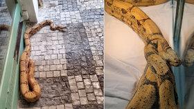 """Dvoumetrový """"macek"""" vyděsil ženu v centru Prahy! Hroznýše se tak lekla, že málem omdlela"""