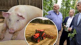 Část farmářů nedosáhne na koronapomoc. Brání tomu nesmyslná podmínka, stěžují si
