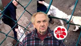 Majitel se tahal se psy o živého kozlíka, hrozí mu pokuta. Proč není policie tvrdší?