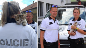 Roztomilé koťátko zablokovalo provoz v České Lípě: Adoptovala ho policistka