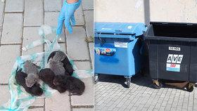 Nářek mláďátek vyděsil lidi v Úvalech: V popelnici našli zvěrstvo!