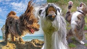 Smějící se koně i tančící kočky: Snímky ze soutěže o nejvtipnější foto domácích mazlíčků pobaví