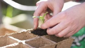 Únor: Je čas na výsev jarní zeleniny! Jak oklamat přírodu?