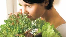 Bylinky na kuchyňském okně: 5 kroků k bohaté úrodě