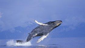 Japonský trajekt se srazil s velrybou. 87 lidí bylo zraněno, osud kytovce je neznámý