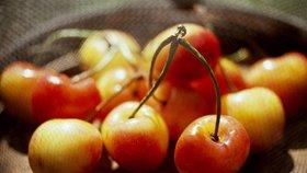 Meruňky i třešně budou nedostatkové zboží. Pomrzly, škody jdou do milionů
