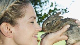 Zakrslý králík: Milý společník i do malého bytu