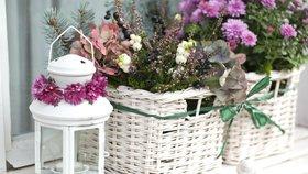 Listopadka: Podzimní kráska do truhlíků