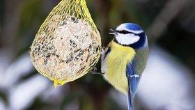 Postavte ptákům krmítko a pozorujte vzácné druhy!