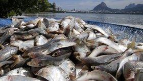 Nebezpečí pro zdraví Čechů? Oblíbené ryby jsou plné plastů a mají i parazity