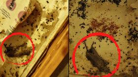 Hnus! Mrtvé myši v přepravkách na jídlo: Inspekce zavřela potraviny na Mělnicku