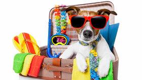 Vezměte psa na dovolenou aneb Jak cestovat s čtyřnohým miláčkem