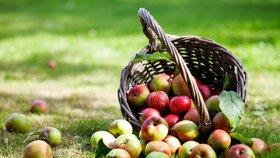 Hra o jablko: Víte, jak správně sklízet a skladovat ovoce?