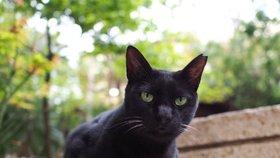 Magické vlastnosti černých koček: Nosí opravdu smůlu?
