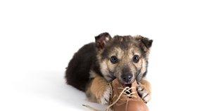 Začněte s výchovou štěněte ihned aneb starého psa novým kouskům nenaučíš