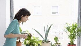 Zplodiny útočí i doma! Pořiďte si rostliny, které vám vyčistí vzduch