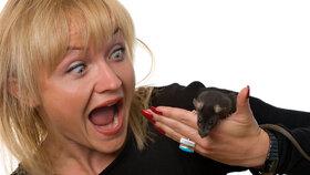 Potkani a myši útočí! Jak vyzrát na nevítané hosty?