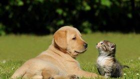 Parazité začínají útočit: Od kočky či psa se může nakazit i člověk!