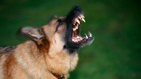 Pes u Prahy pokousal dítě! Je velmi vážně zraněné, letěl pro něj vrtulník