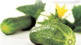 Okurky - zdravá a dietní pochoutka