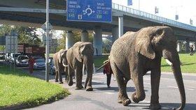 Do Děčína se vrátili sloni: Usadili se u rybníka