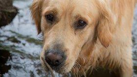 Tyran zamkl psa v koupelně a odjel: Hladové zvíře se chytře zachránilo!
